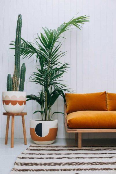 large-house-plants-Dypsis-lutescens-600x899